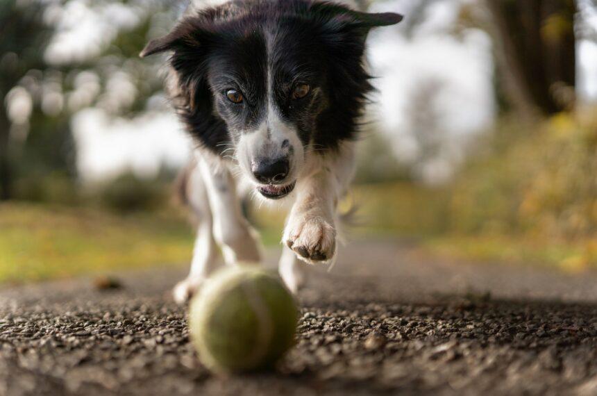 Jak opiekować się psem i co warto kupić zanim zwierzak pojawi się w naszym domu?