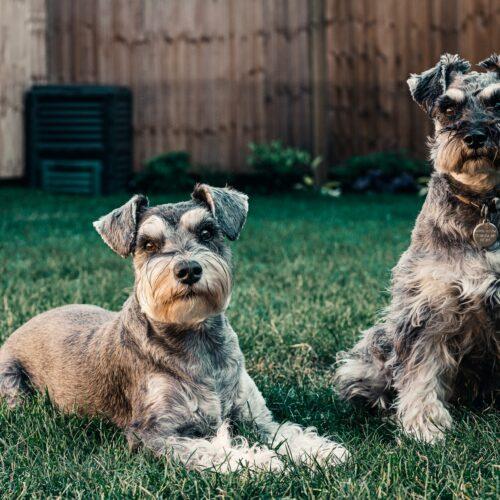Objawy lęku separacyjnego u psa oraz sposoby na rozwiązanie problemu