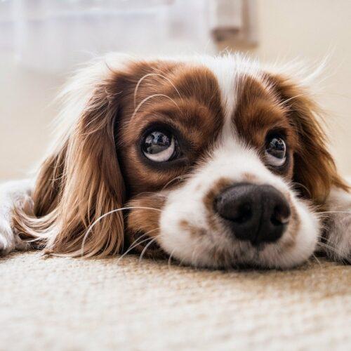 Czym karmić psa niejadka?